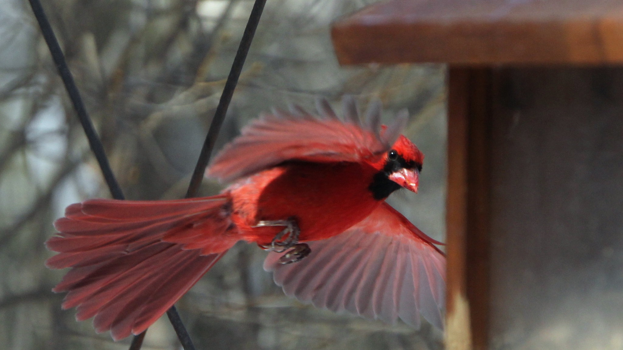 Cardinal sightings never get old. (Robert Engberg / Flickr)