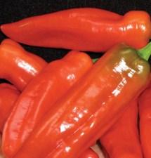 carmen red pepper