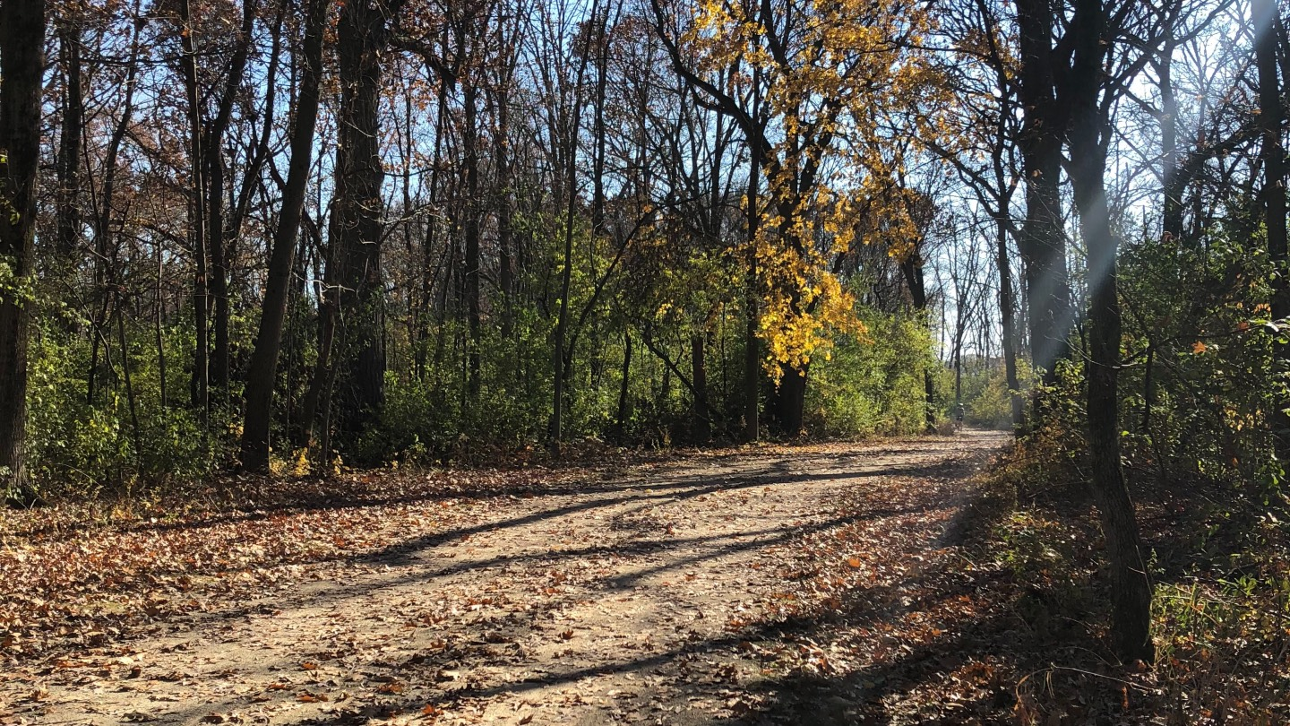 Forest preserve advocates would like to see a team of staff dedicated solely to trail maintenance. Trail usage doubled in 2020 compared with 2019. (Patty Wetli / WTTW News)