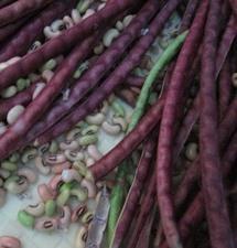 red yard long bean