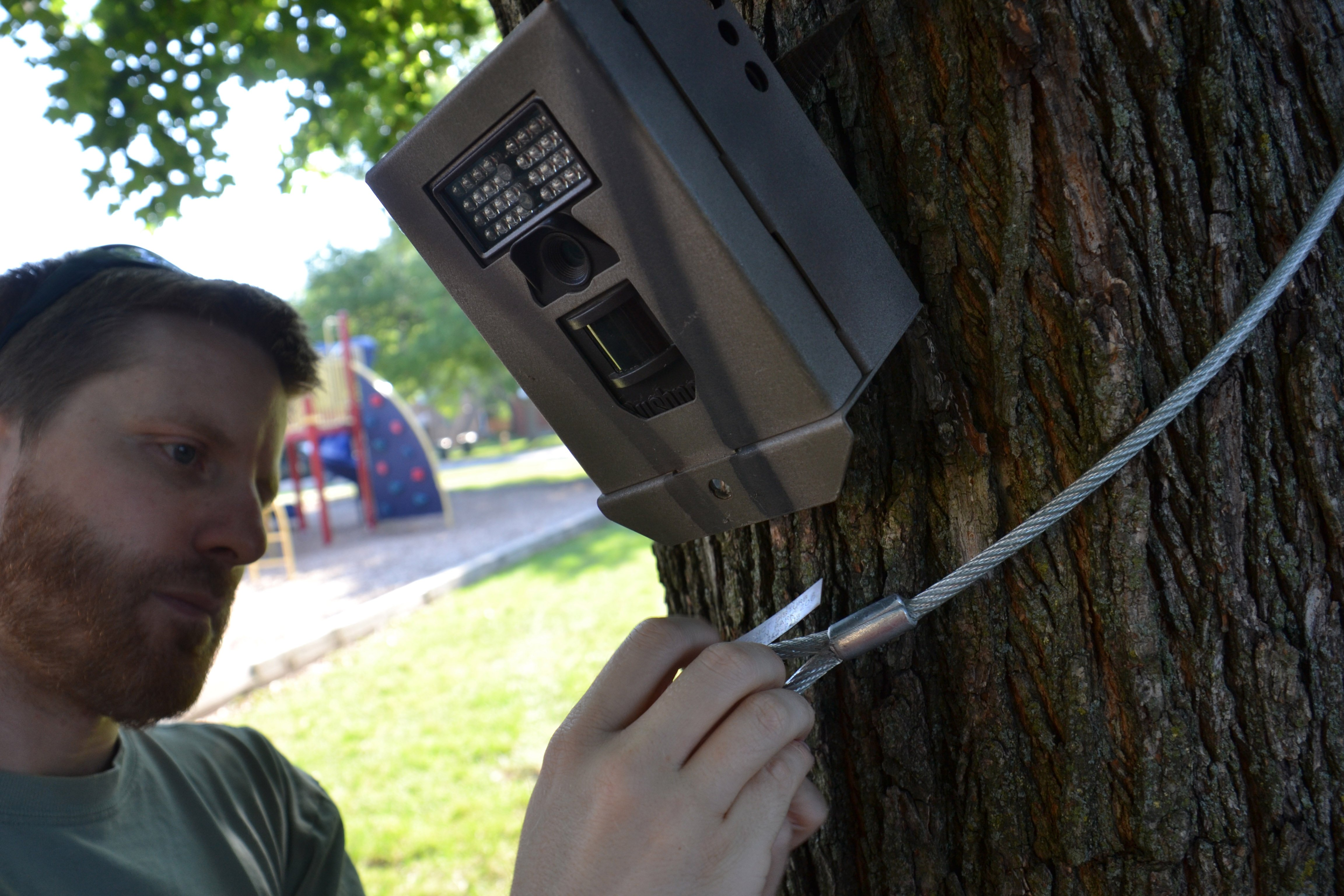 Seth Magle, Ph.D., Director of the Urban Wildlife Institute, secures a camera trap that is used to capture data for Chicago Wildlife Watch. (Courtesy of Urban Wildlife Institute/Lincoln Park Zoo)