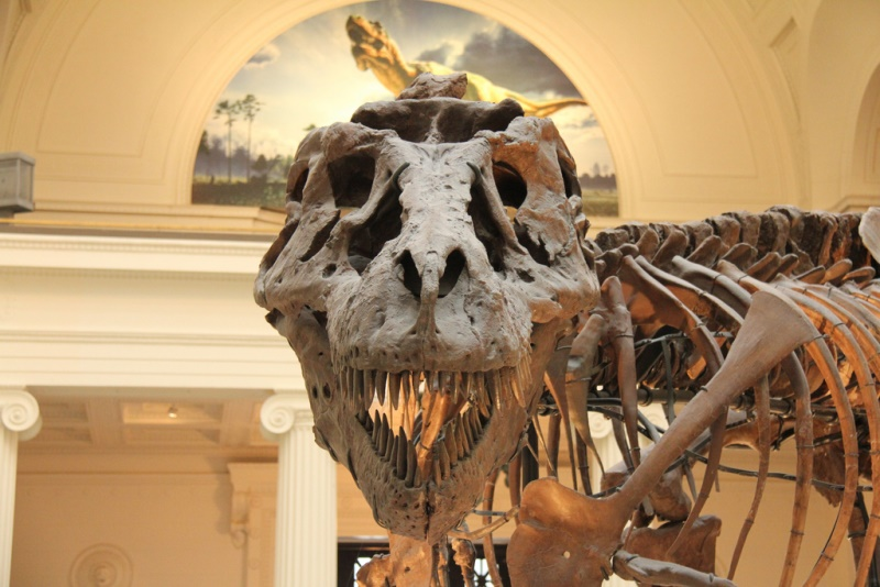 Sue the Tyrannosaurus Rex (John Mountjoy / Flickr)