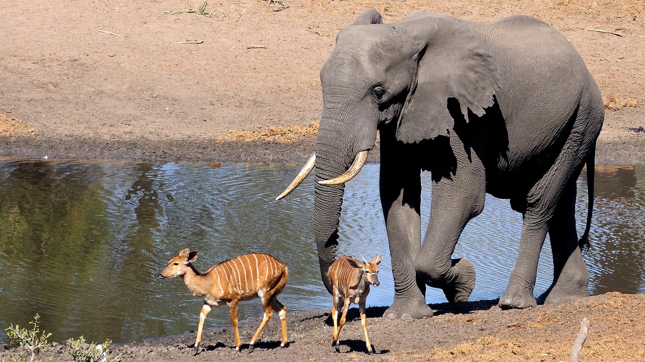 Tembe Elephant Park, South Africa. (Andrew Ashton / Flickr)