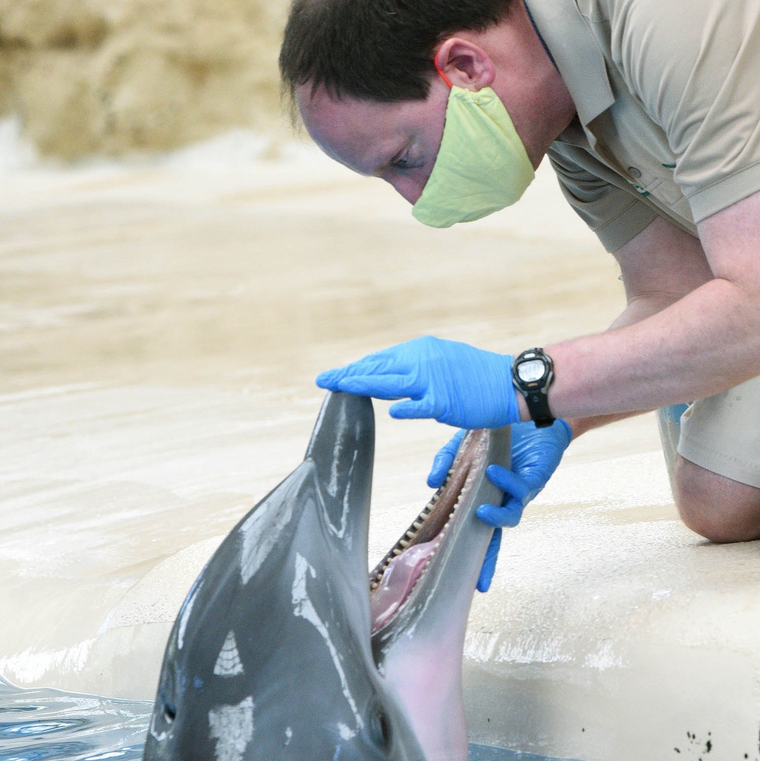 Andy Ferris, a senior animal care specialist, during a husbandry session with one of Brookfield Zoo's bottlenose dolphins. (Jim Schulz / Chicago Zoological Society)