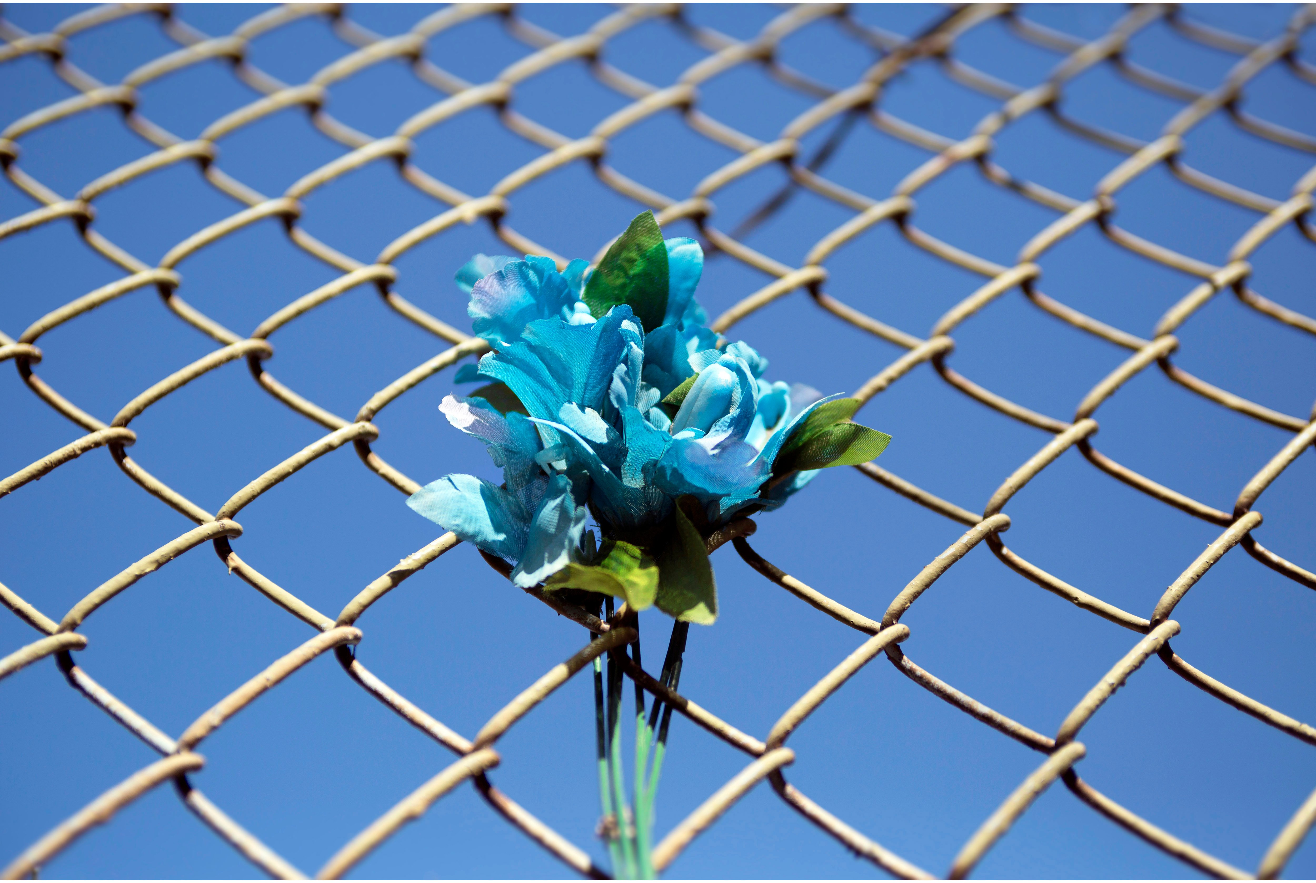 A blue flower placed in a fence in memorial of a man killed in Pilsen. (Courtesy of Thomas Ferrella)