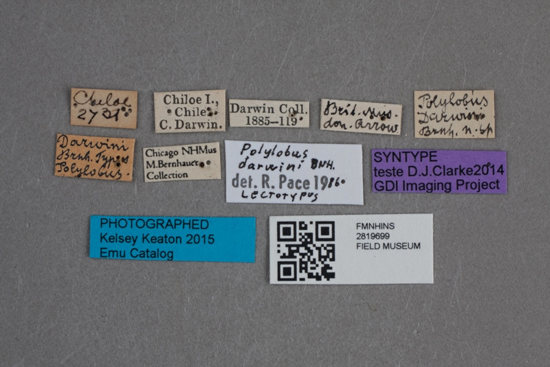 "Labels for Field's ""Darwin beetle"" (Kelsey Keaton / © The Field Museum)"