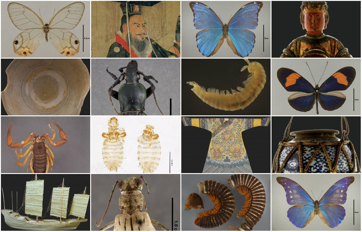 Just a small sample of the Field Museum's digitized artifacts and specimens.