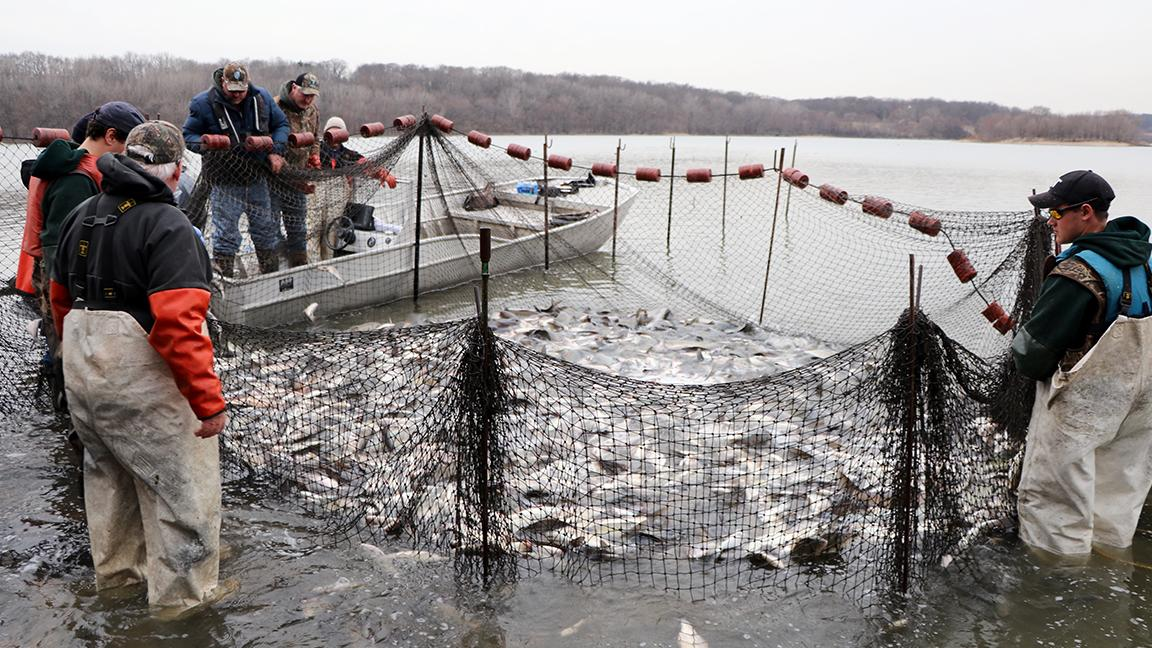 State Says Asian Carp Plan Too Expensive Activists Say Dont - Asian carp map 2016 non us