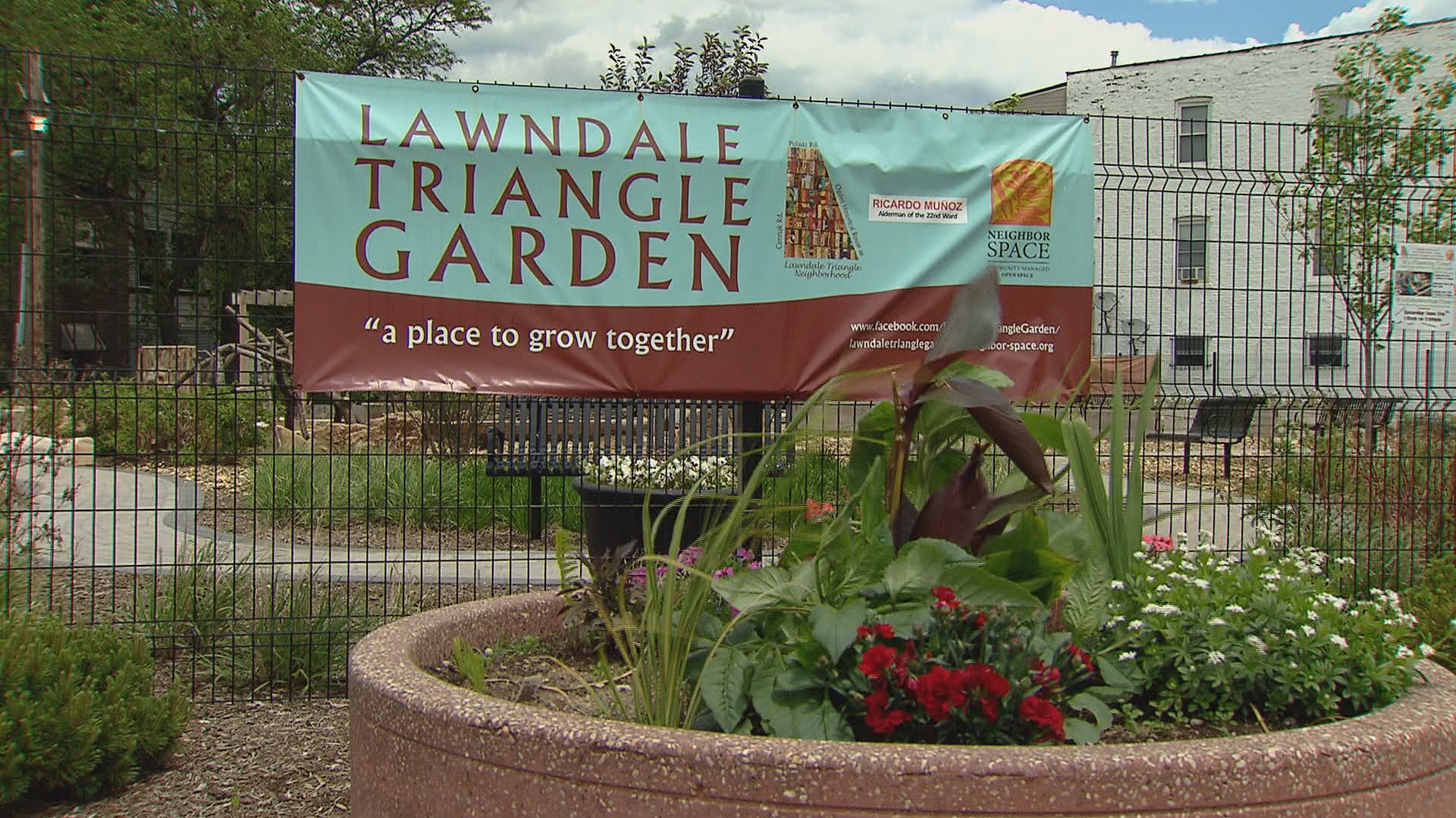 Community Garden Flourishes in North Lawndale | Chicago News | WTTW