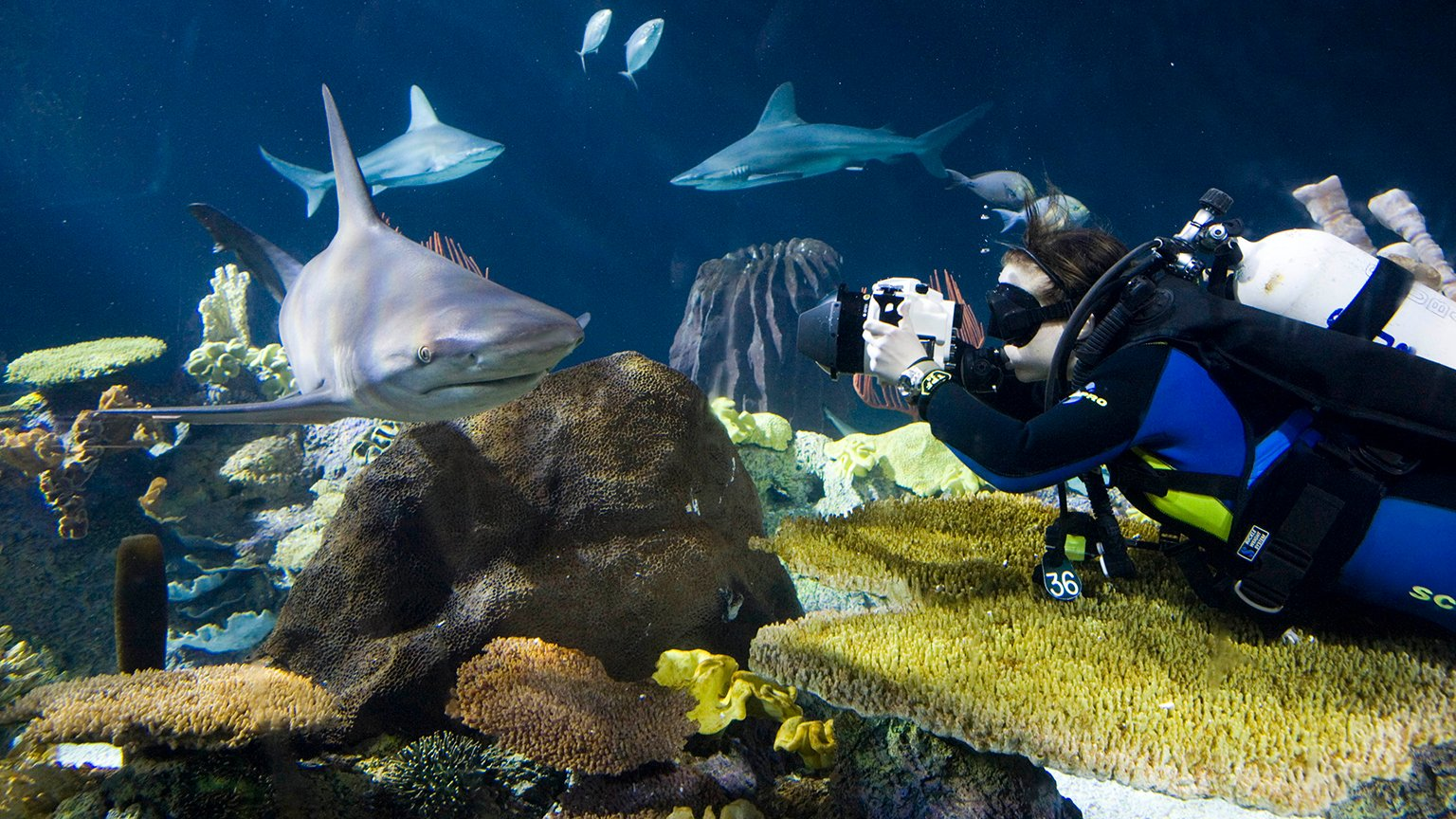 The Aquatic Life of Shedd Photographer Brenna Hernandez ...