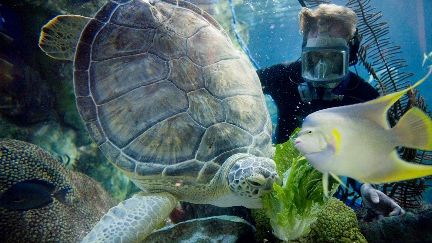 Chicago's Shedd Aquarium, by the Numbers | Chicago News | WTTW