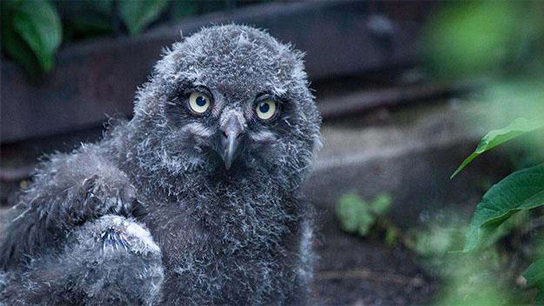 Four Owls Tour