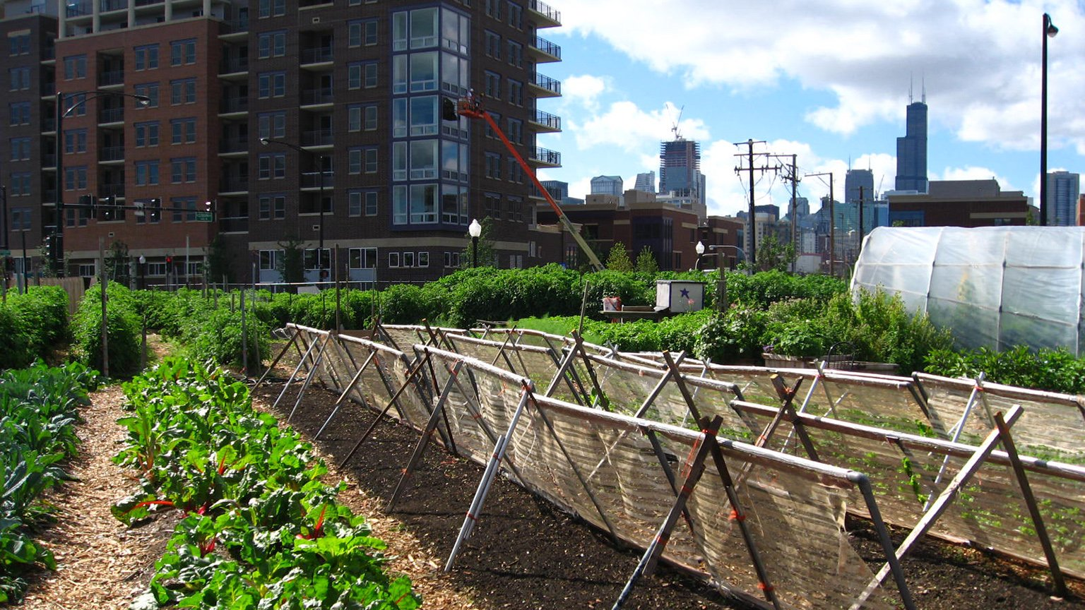 Illinois Lawmakers Override Rauner to Enact Urban Agriculture Law