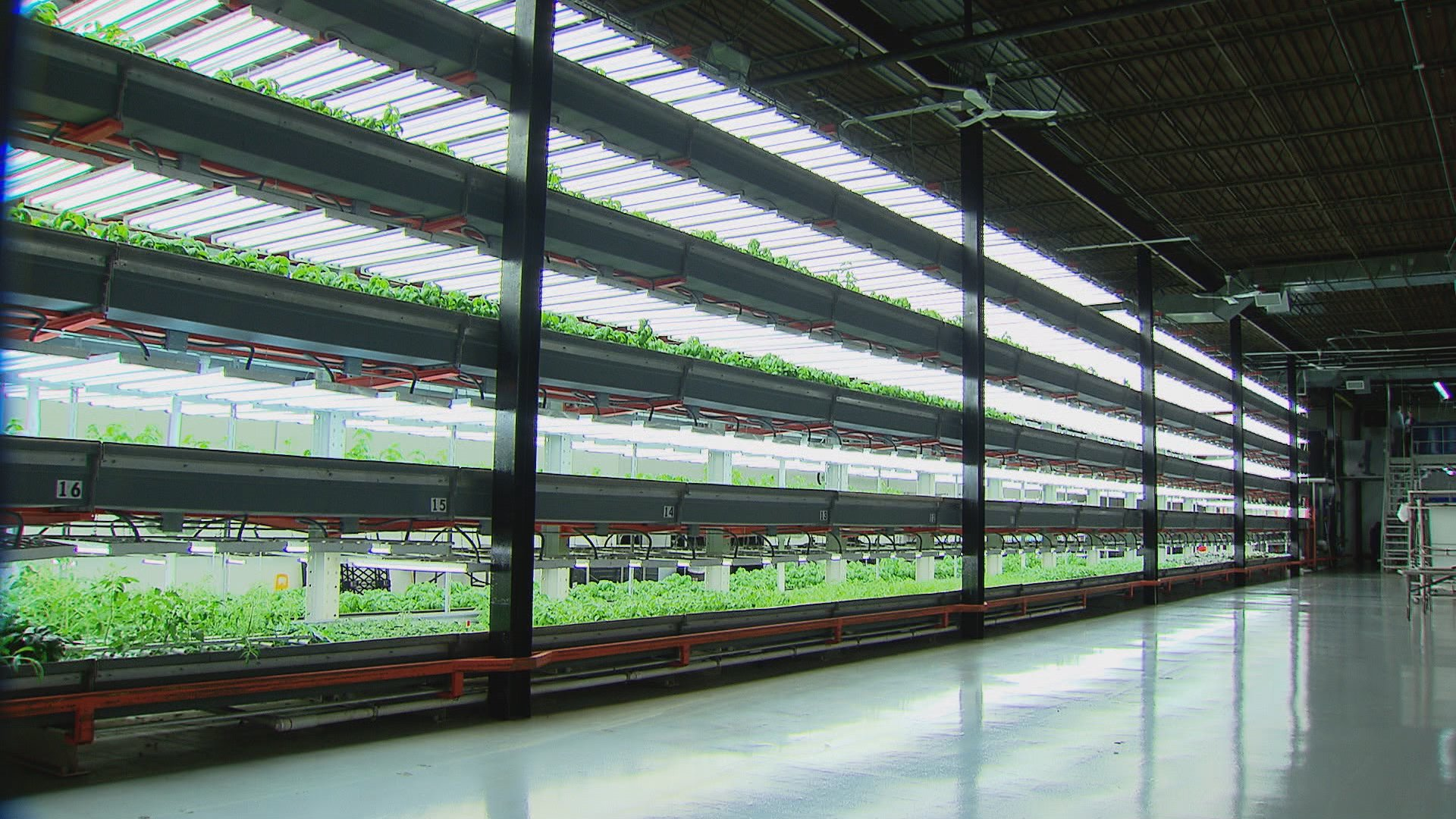 Vertical farming s rise in chicago chicago tonight wttw for Indoor fish farming