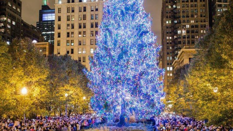 The Search Is On For Chicago's Official Christmas Tree   Chicago