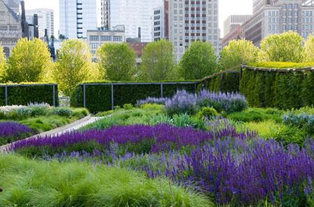Prairie Perennials Inspire Home Gardens Chicago Tonight Wttw