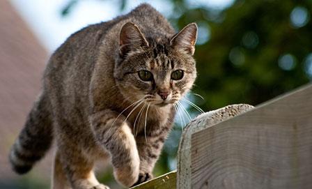 Best Cats For Rat Control