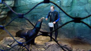 Ken Ramirez feeds Tyler, the California sea lion at the Shedd Aquarium