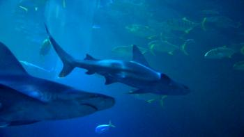 Wild Shark Tank