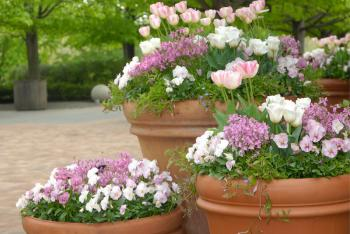 Spring Containers At The Chicago Botanic Garden