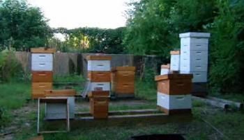 Dan's apiary