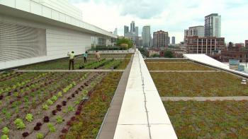Vincent Lai, head chef at McCormick Place, is well aware of the garden's limitations due to Chicago weather. He's says the crew is trying to focus on vegetables that can survive the inevitable cold months.