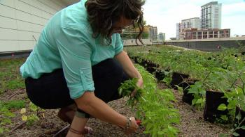 For Angela Mason, this rooftop garden is in some ways a trial for projects to come. Along with the crew, she's experimenting daily with different crops and soil amendments in order to tap into the garden's highest potential.