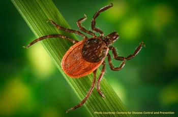 The black-legged or deer tick is the only tick that transmits the bacterium that causes Lyme disease; courtesy: Centers for Disease Control and Prevention