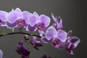 Orchid; courtesy Chicago Botanic Garden