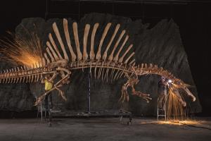 Workers grind the rough edges off an anatomically precise, life-size Spinosaurus skeleton created from digital data. Scientists assembled a computer model from CT scans of fossils, images of lost bones, and extrapolations from related creatures, then expressed it in polystyrene, resin, and steel. Photo by Mike Hettwer/National Geographic (October edition)