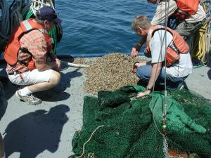 Fishermen examine a pile of Quagga mussels. Image credit: NOAA