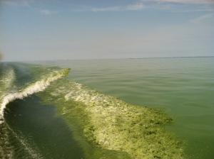Algae blooming in Lake Erie. Image credit: NOAA/USGS