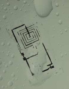 A biodegradable integrated circuit during dissolution in water; Photo courtesy Beckman Institute, University of Illinois and Tufts University