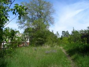Image Credit: Friends of the Bloomingdale Trail. Click here to view a photo gallery.
