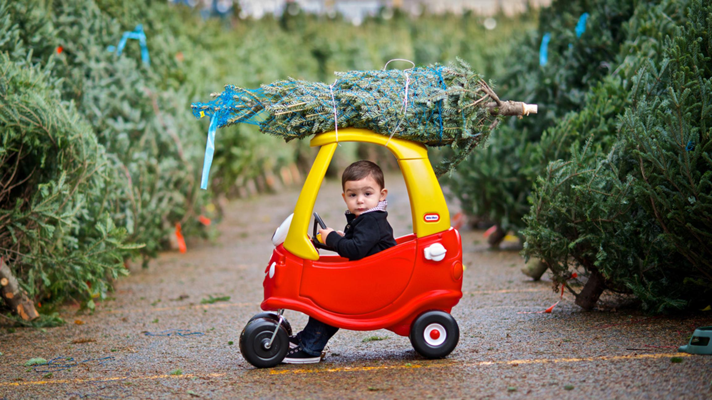 Road trip: Browse trees by the dozen at a Christmas tree farm in DeKalb. (FrankGuido / Flickr)