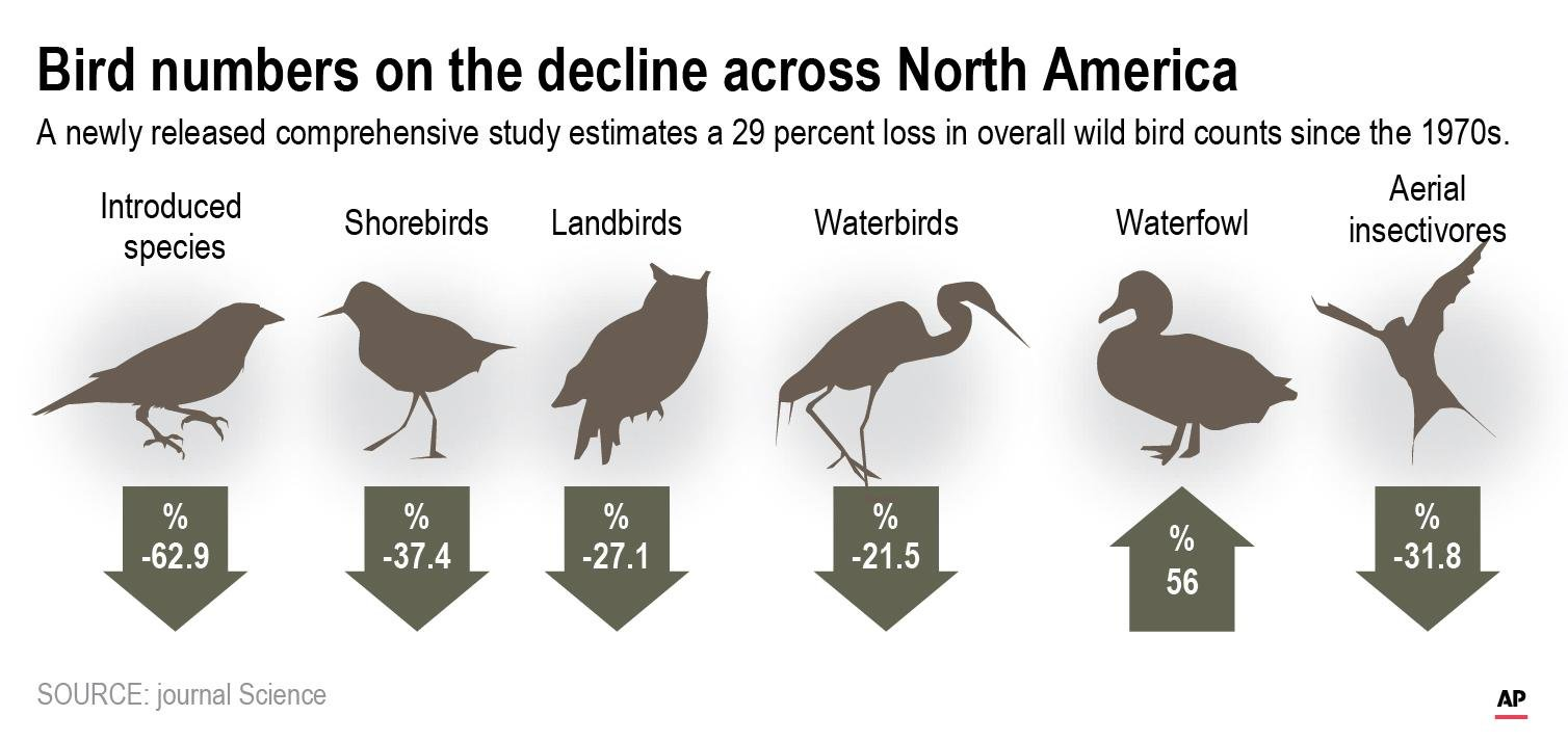 A new study finds there are nearly 3 billion fewer wild birds flying in North American skies than in 1970.