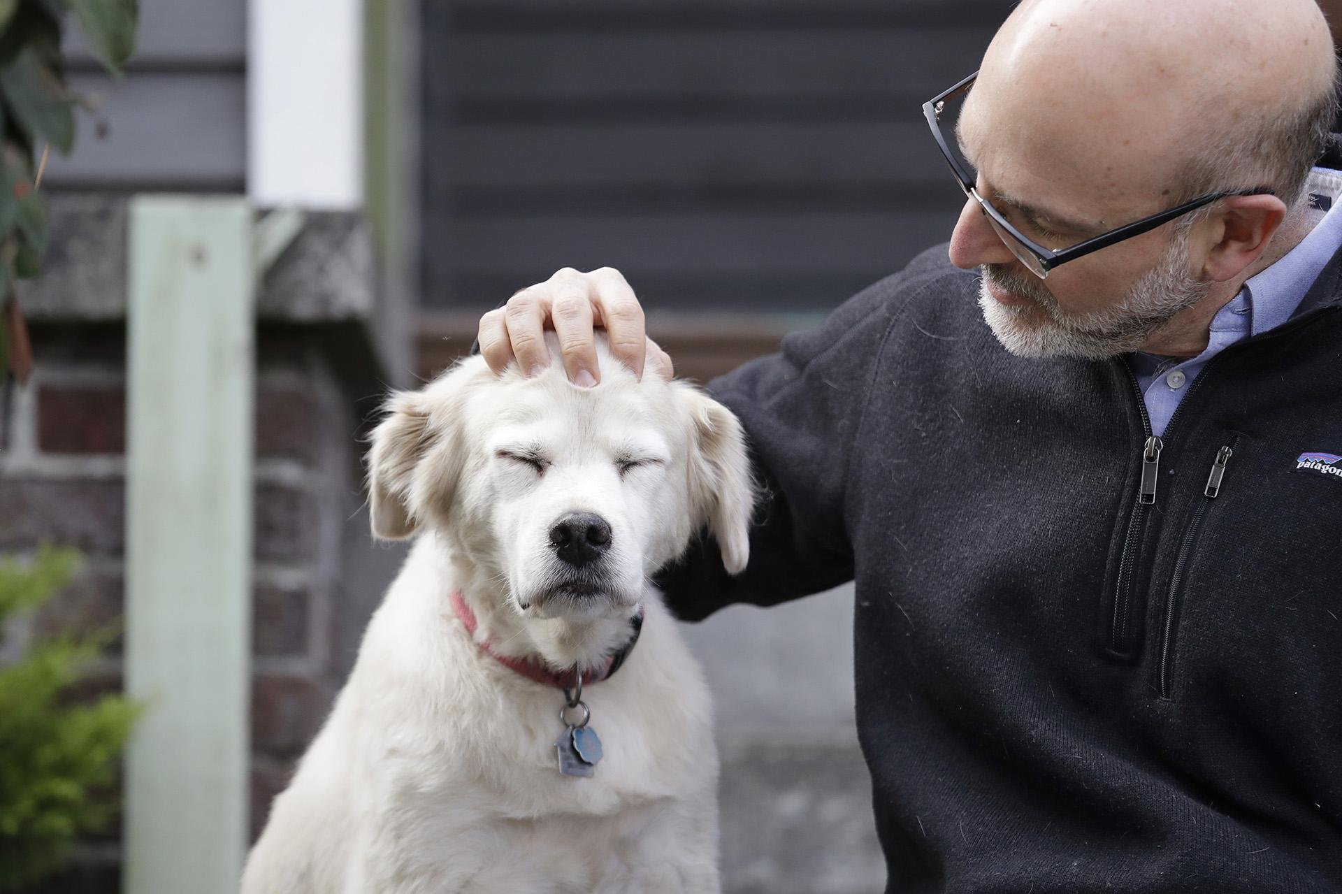 In this Monday, Nov. 11, 2019 photo, University of Washington School of Medicine researcher Daniel Promislow, the principal investigator of the Dog Aging Project grant, rubs the head of his elderly dog Frisbee at their home in Seattle. (AP Photo / Elaine Thompson)