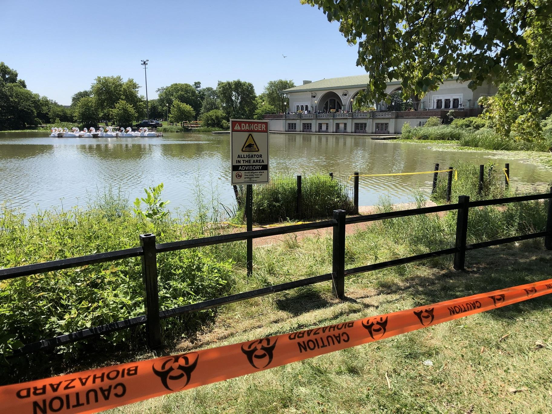 Efforts to capture an alligator in the Humboldt Park Lagoon continued for the fourth day on Friday. (Alex Ruppenthal / WTTW News)