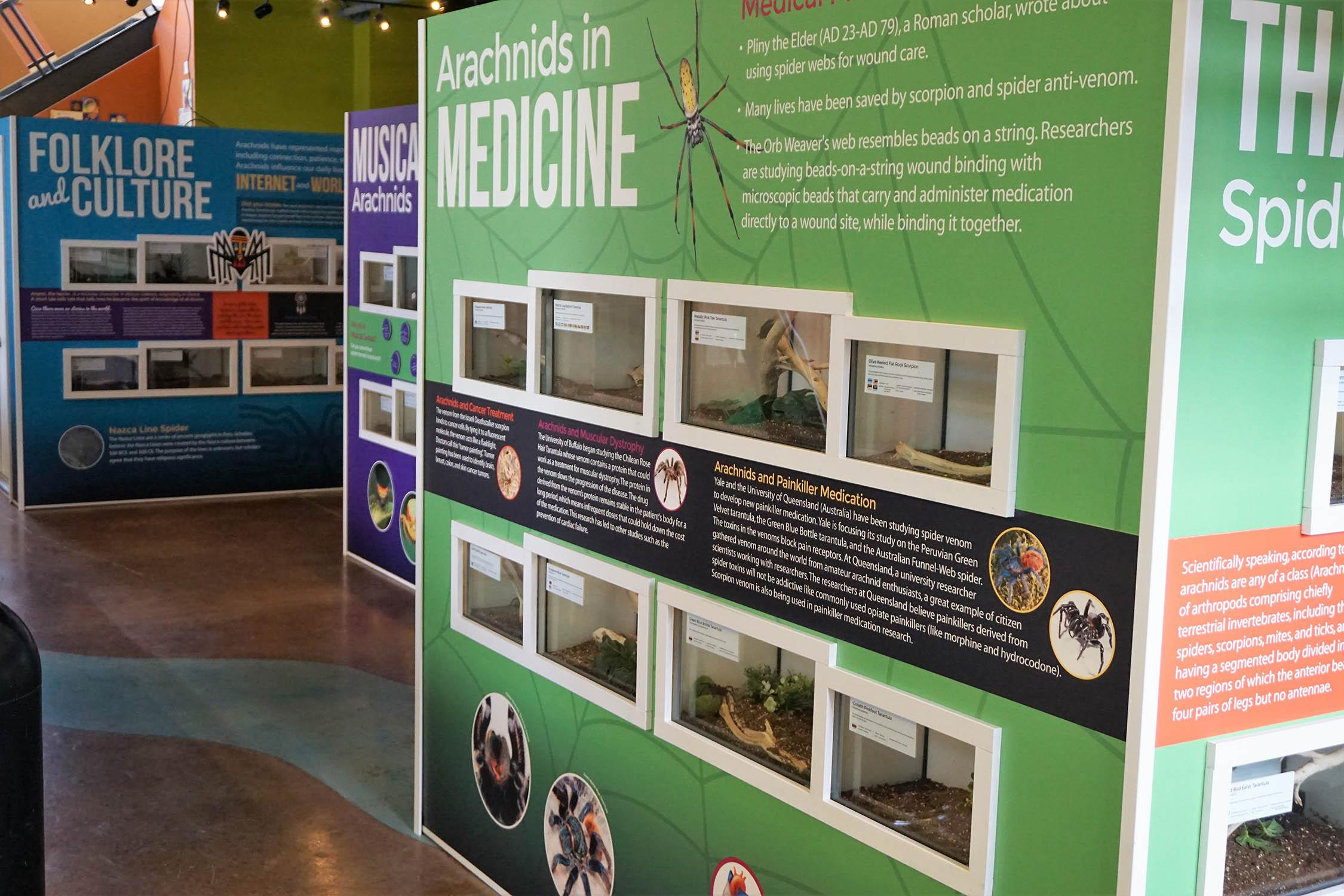 Brookfield Zoo's exhibit highlights the significance of arachnids in art, culture and science and medicine. (Jim Schulz / Chicago Zoological Society)