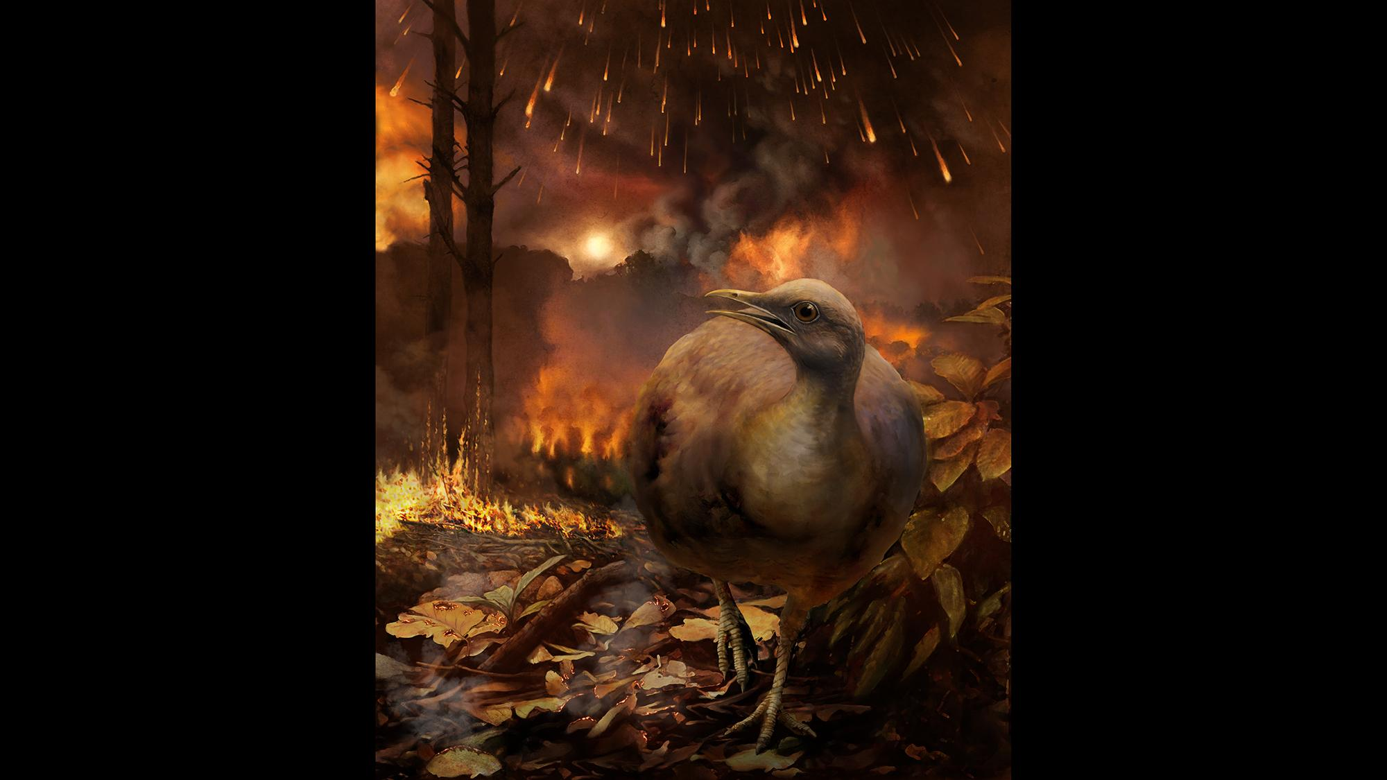 An illustration showing the impact of the Chicxulub asteroid about 66 million years ago, which led to the extinction of dinosaurs and also killed tree-dwelling birds. (Phillip M. Krzeminski)