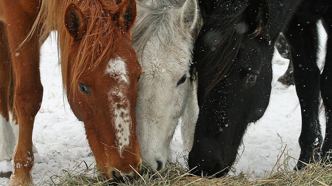 Bureau Of Land Management We Won T Euthanize 45 000 Wild Horses Chicago News Wttw