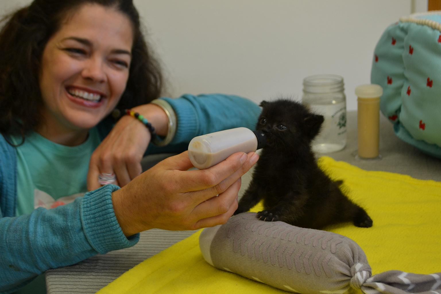 CACC's Jenny Schlueter bottle feeds Jesus, a 4-week-old kitten brought to the shelter last month. (Alex Ruppenthal / Chicago Tonight)