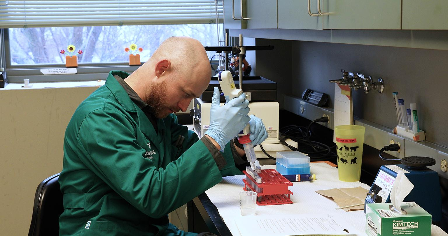 Matt Mulligan, a wildlife research coordinator at Lincoln Park Zoo, tests samples of bat guano to measure for levels of cortisol, an indicator of stress. (Courtesy Lincoln Park Zoo)