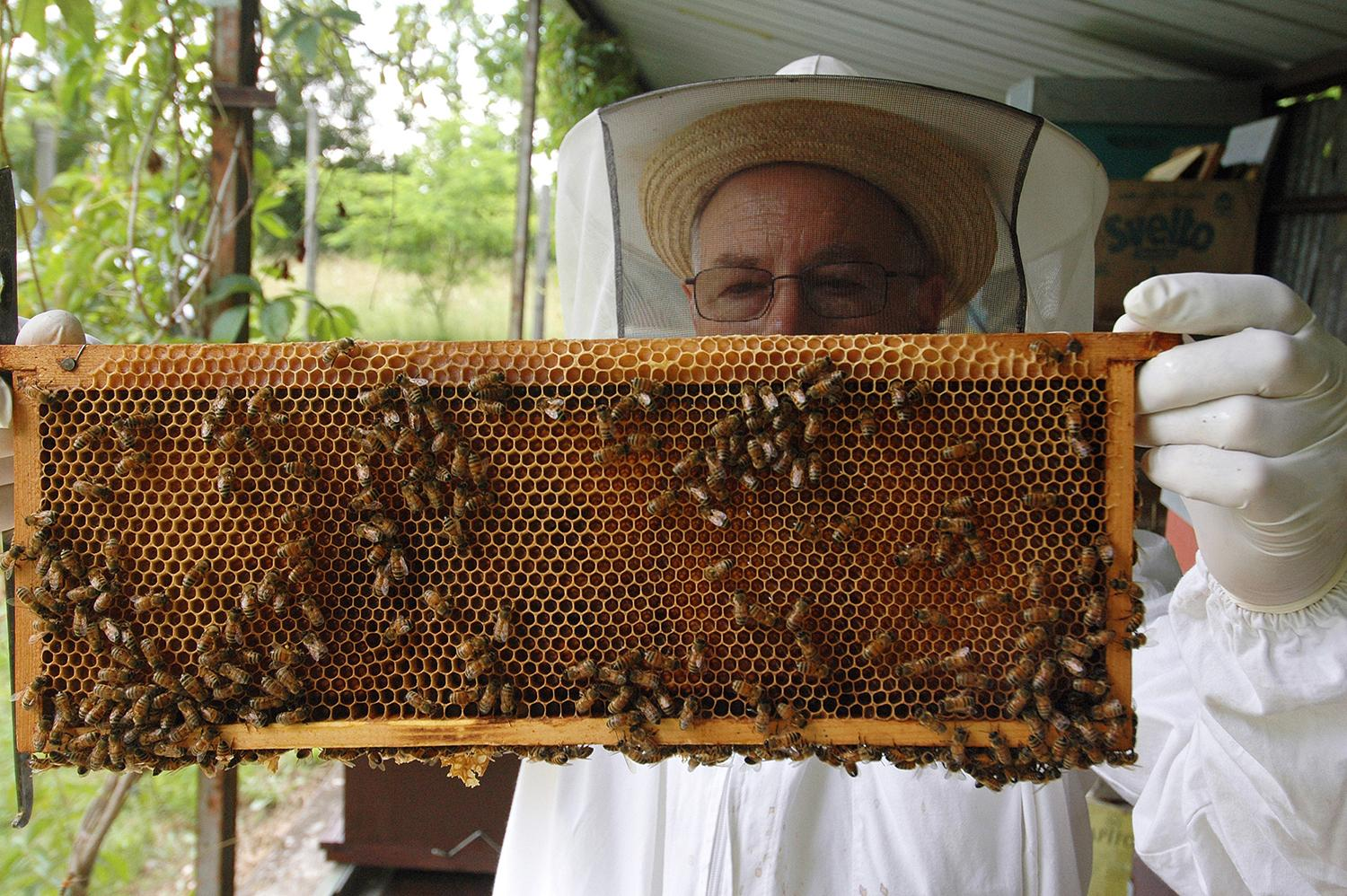 A beekeeper from Apicoltura Avianese Honey Farm in Italy checks for the queen bee on a honeycomb frame. (U.S. Air Force photo / Senior Airman Justin Weaver)
