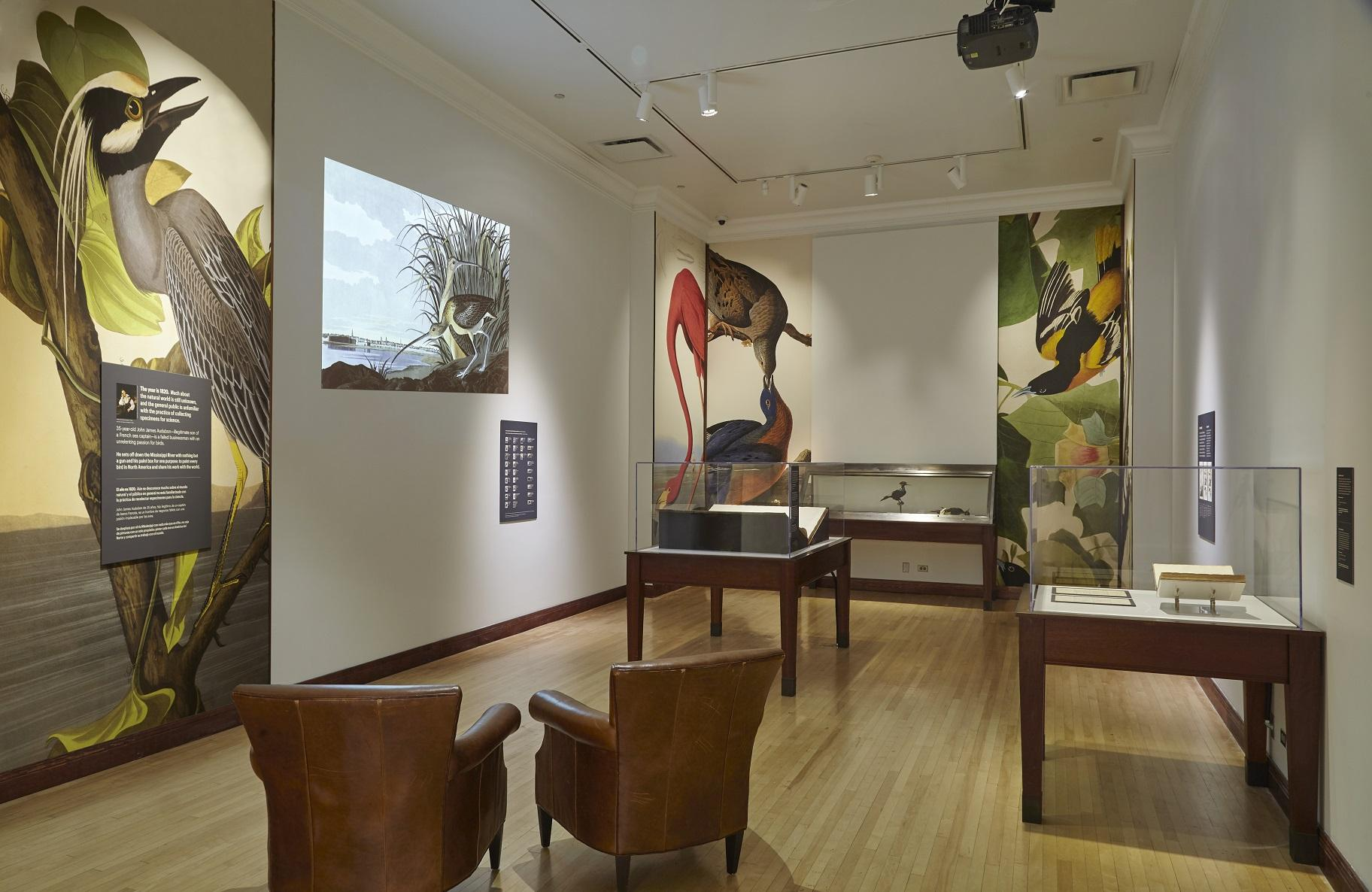 "Housed in Brooker Gallery, the Field Museum's new exhibit ""Audubon's Birds of America"" features floor-to-ceiling replicas of Audubon's most famous illustrations. (Michelle Kuo / Field Museum)"