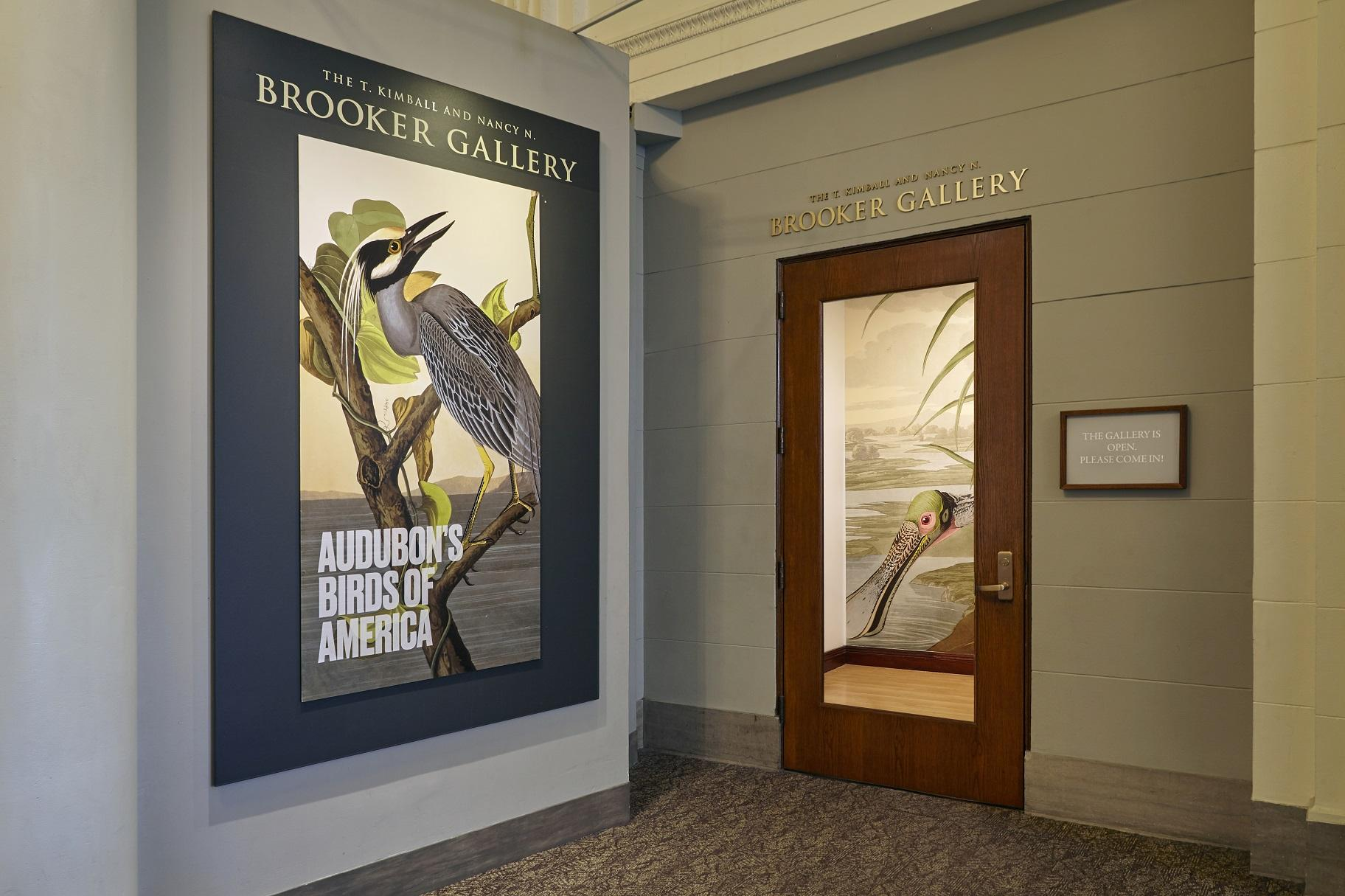 """Audubon's Birds of America"" is on display at the Field Museum through Dec. 1. (Michelle Kuo / Field Museum)"