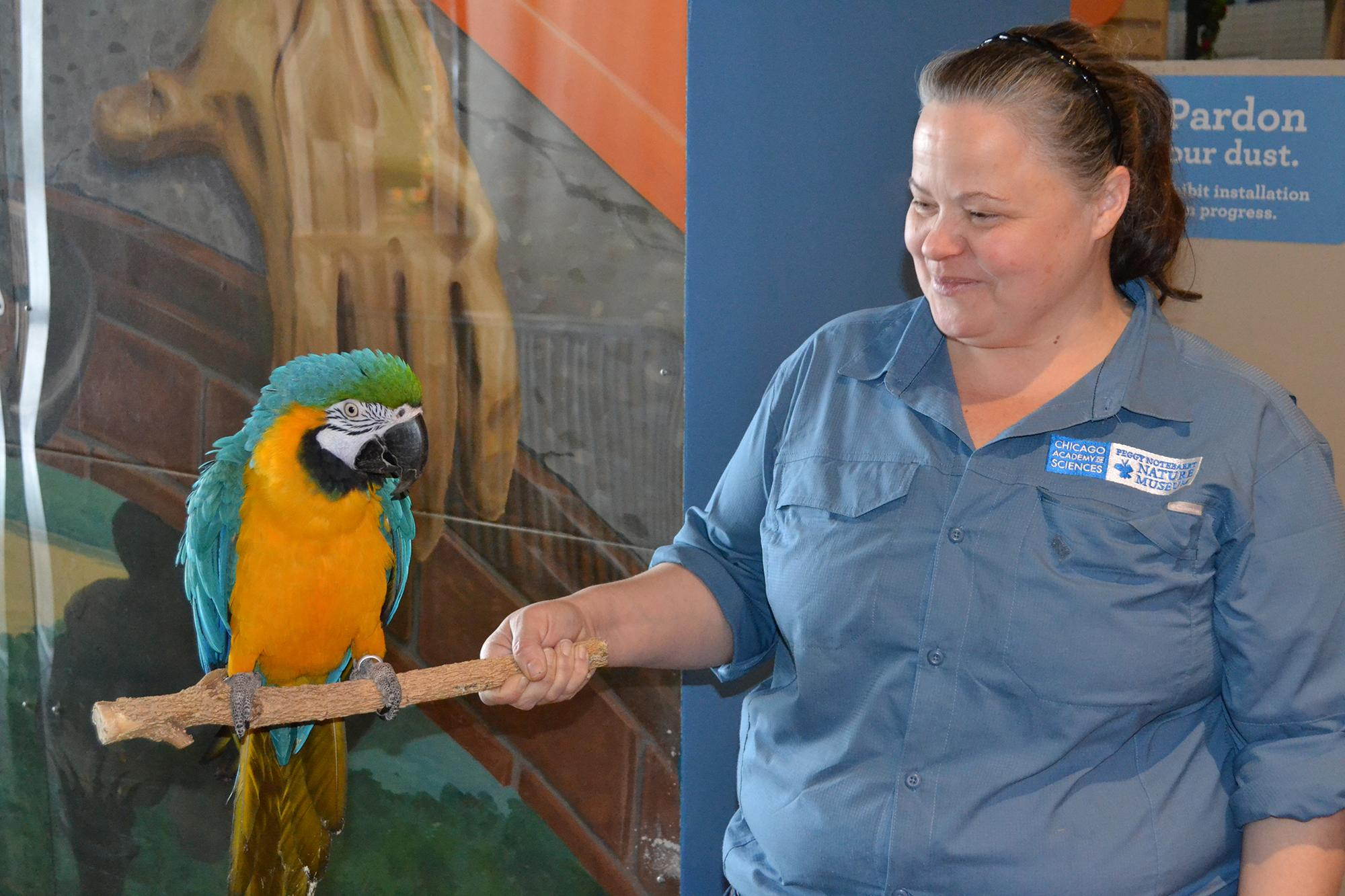 Missy, a 26-year-old blue and gold macaw, sits on a branch held by Lalainya Goldsberry, animal caretaker at the Peggy Notebaert Nature Museum.