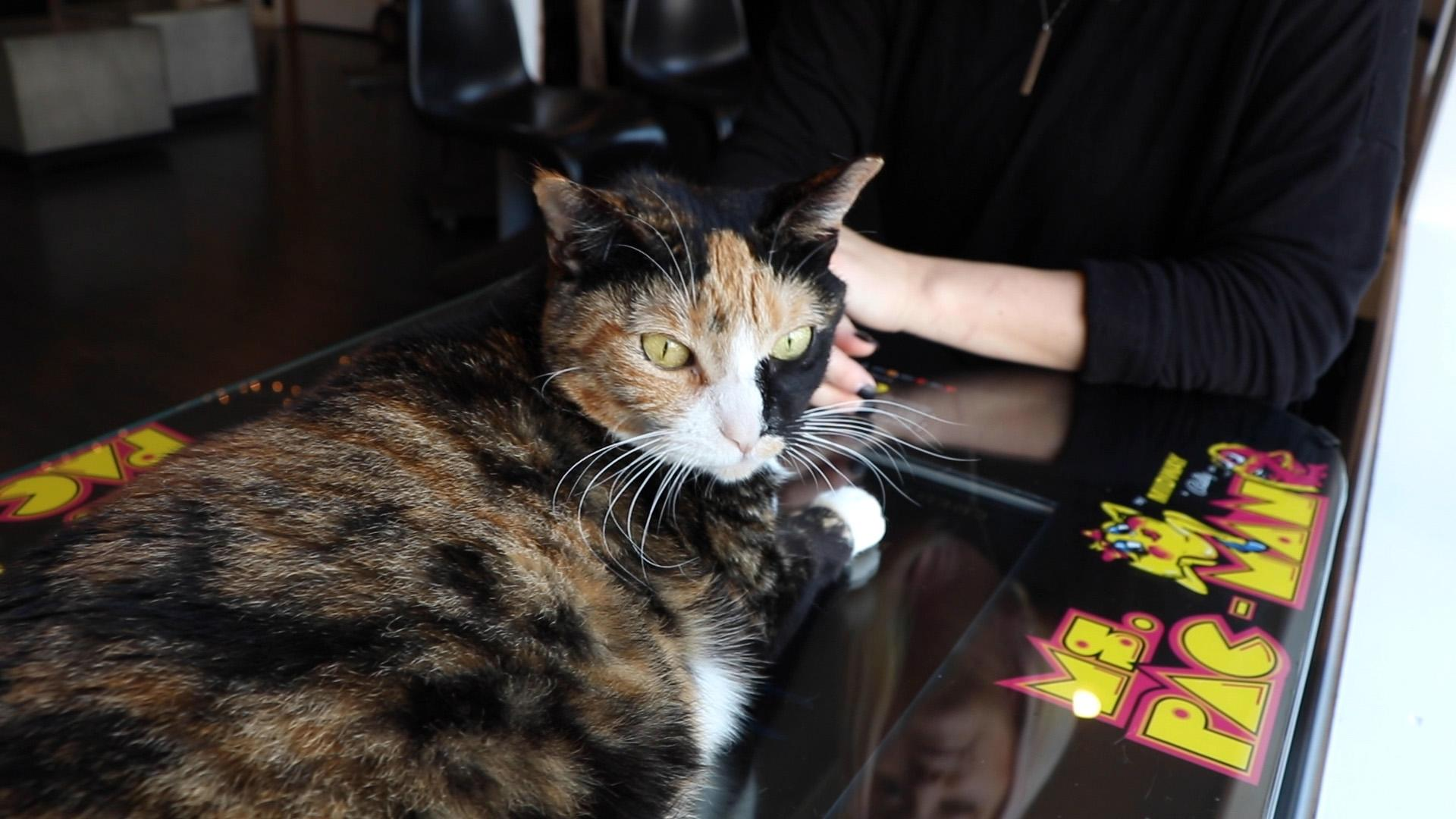 Spring, a cat rescued from the U.S. Virgin Islands, rests on a Ms. Pac Man game at Catcade. (Evan Garcia / WTTW News)