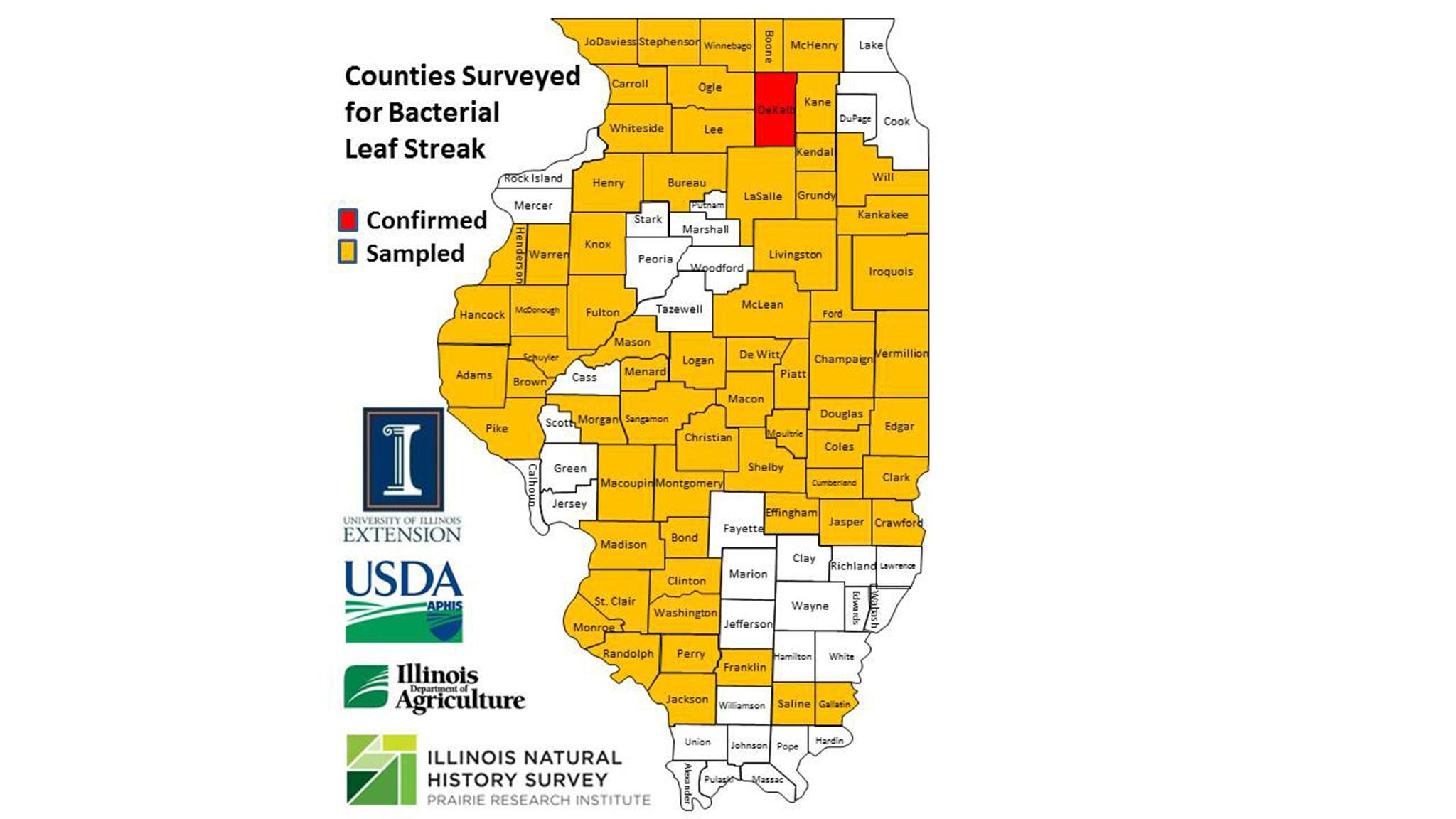 Cook County was not one of the 66 Illinois counties surveyed for bacterial leaf streak.