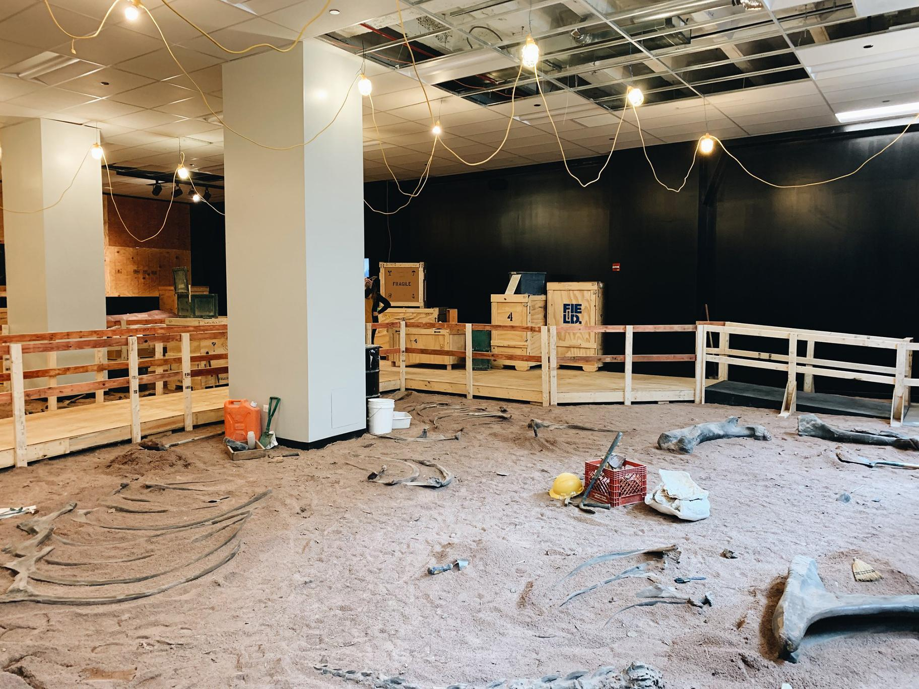 "Inside the Field Museum's new pop-up ""Dig Site"" at 333 N. Michigan Ave. (Courtesy The Field Museum)"